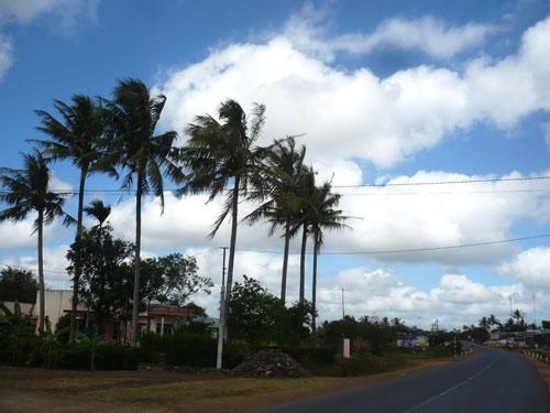 Nha Trang với hình ảnh cây dừa quen thuộc
